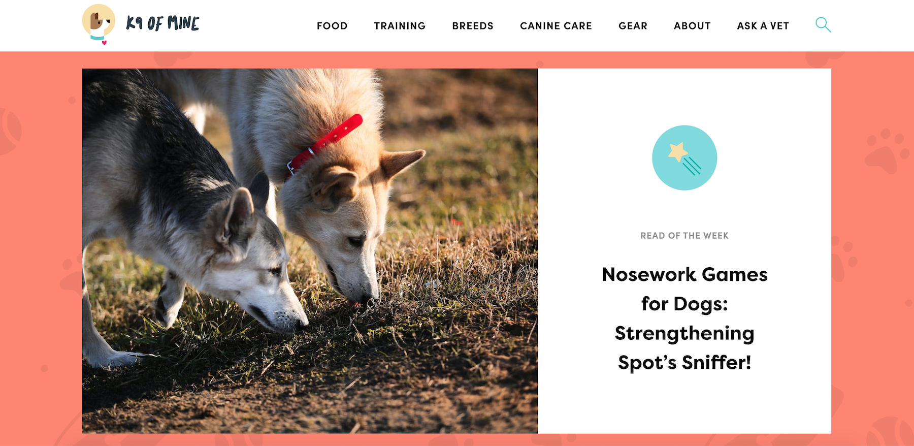 Niche site idea dog training